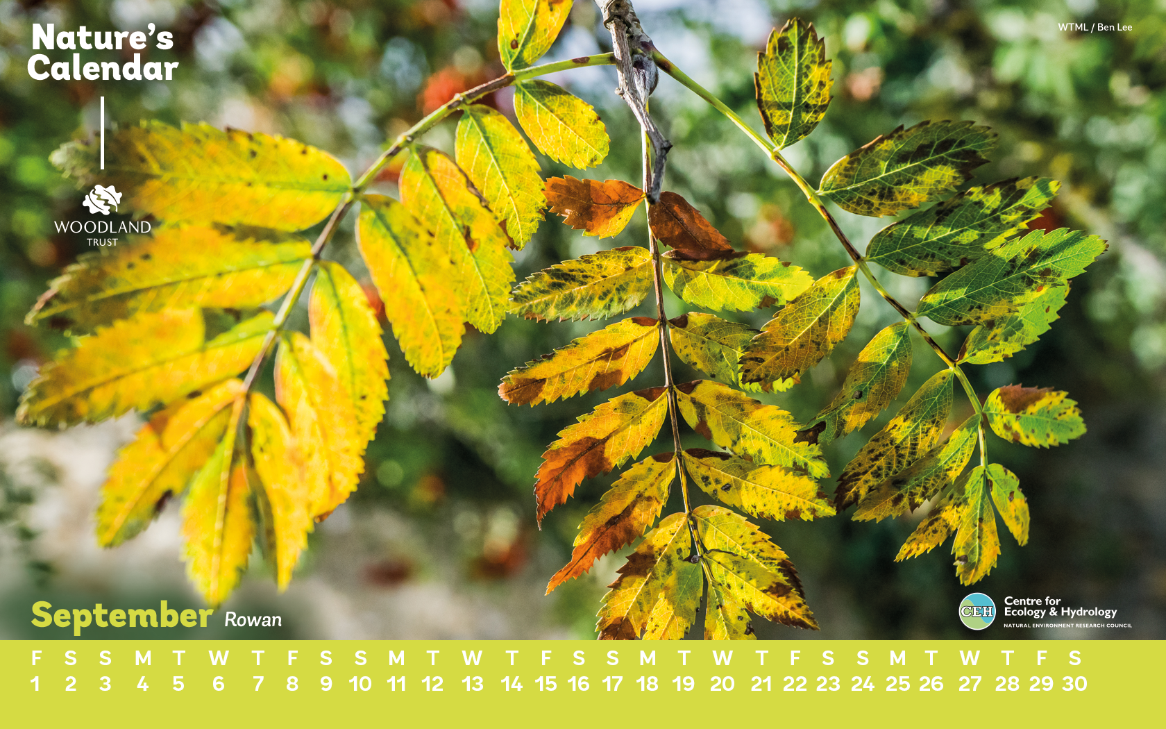 Use Our Rowan Desktop Wallpaper During September