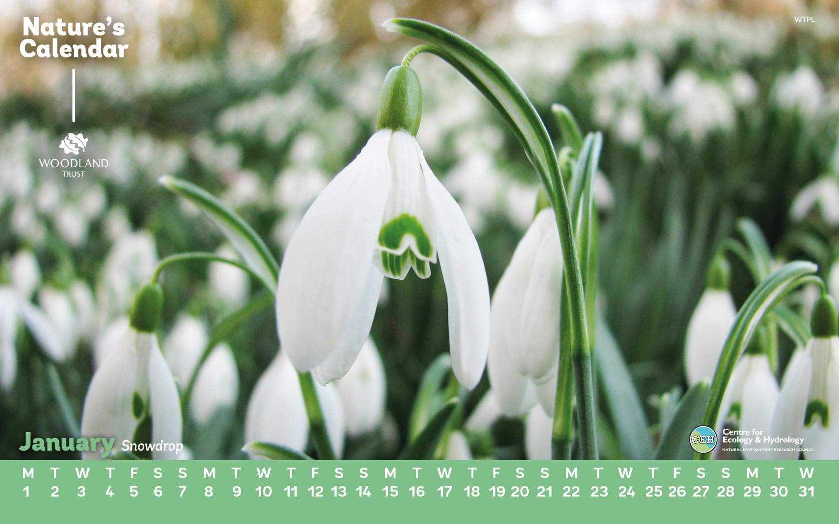 When snowdrops bloom 17